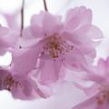 Photos: flower-9146