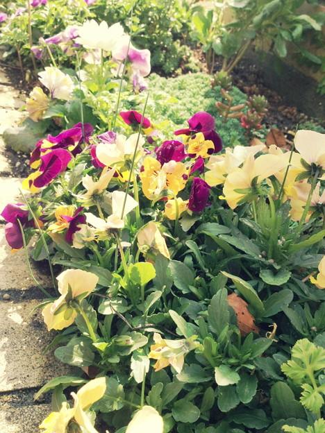 3月上旬 花壇
