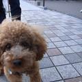 Photos: 【上野】不忍池|上野公園[東京]