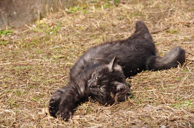 子猫の仕草2