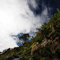 秋空にヤマハハコ