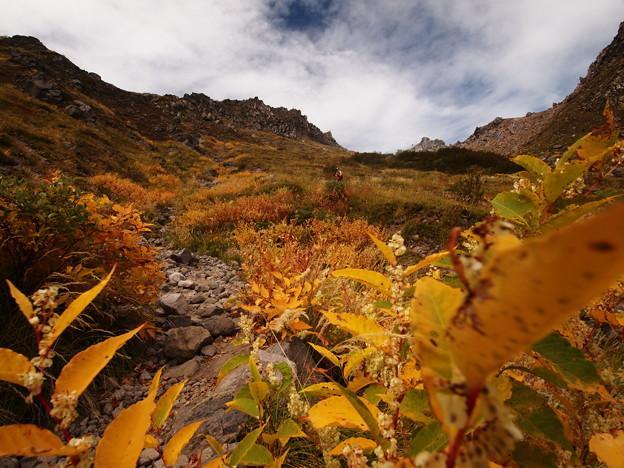 Photos: 黄色の斜面