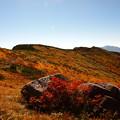 草紅葉の丘