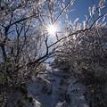 樹氷のプロムナード