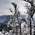 大峰を望む氷結林