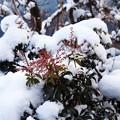 雪の中にも春の兆し