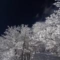 蒼天におどる樹氷
