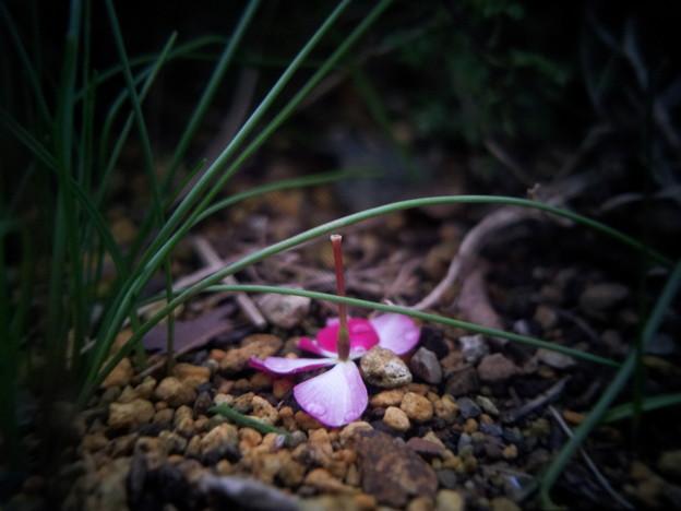 写真: 水滴と花