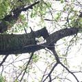 Photos: まだ残っていた桜