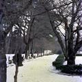 Photos: 松江城庭園