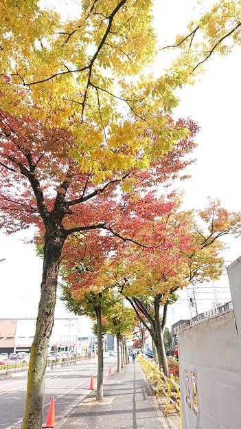 時々通る道で見つけた少しばかりの紅葉