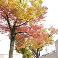 Photos: 時々通る道で見つけた少しばかりの紅葉