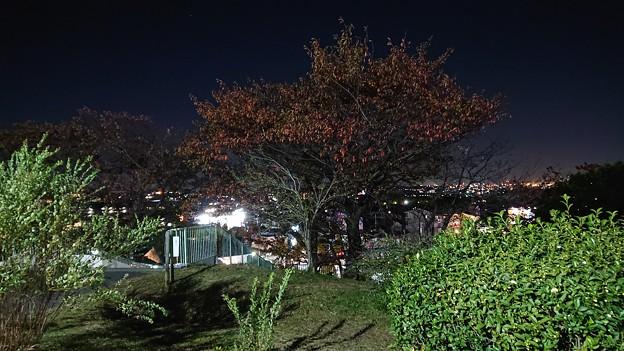木々の間から覗く灯