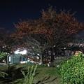 Photos: 木々の間から覗く灯