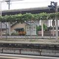 2008年8月〔06〕白馬旅行 車窓 塩尻駅ホームの葡萄