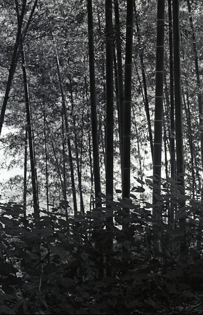 1986年頃 竹林
