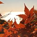 今年最後の秋色!