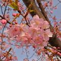 桜(2013)