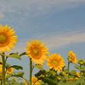 写真: 夏の終わりに・・・