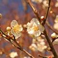 写真: 春うらら?