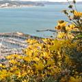 写真: 江の島散歩?