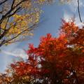 写真: 頭上の秋