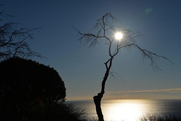写真: 陽はまた昇る
