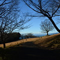 写真: 冬の公園