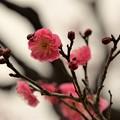 写真: ピンクも・・・