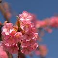 春光浴びて