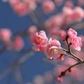 写真: 春色?