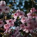 写真: 桜の季節