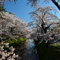 Photos: 弘前便り
