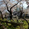 写真: 自転車に乗って・・・