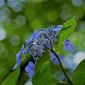 写真: 青が好き!