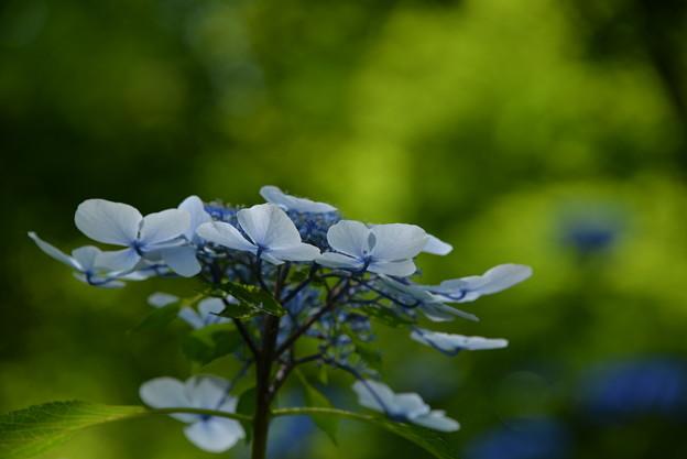 Photos: 白と青