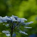 写真: 白と青