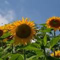 写真: 夏日