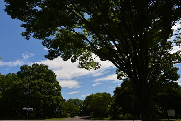 写真: 真夏日の公園
