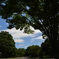 真夏日の公園