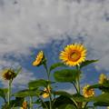 写真: 秋空と・・・