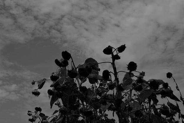 写真: 晩夏