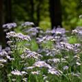 写真: 林の中に・・・