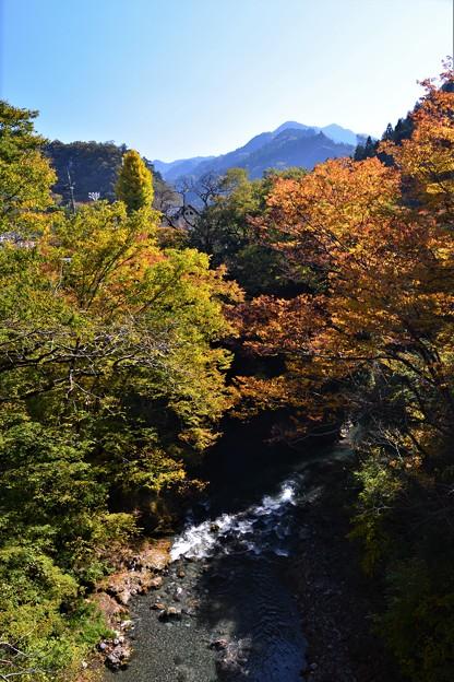 写真: 橋の上から