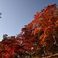 写真: 朱に染まる(長瀞)