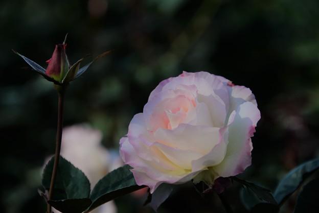 写真: ほんのりピンク