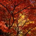 写真: 秋色コラボ