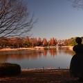写真: 晩秋の公園