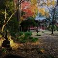 写真: 秋の名残り