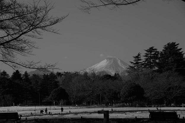 写真: こんにちは富士山?